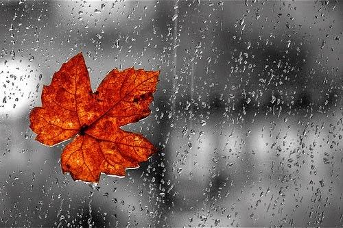 Ảnh chiếc lá mùa thu dưới cơn Mưa